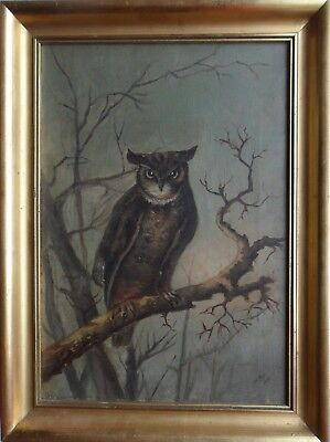 'N. Pool' Fine Large Original Signed Oil On Canvas 'Owl On Branch' Dated 1908