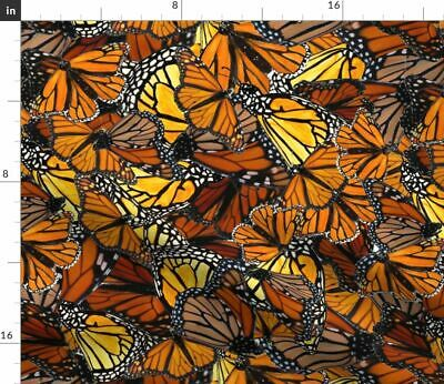 Butterfly With Butterfly Australian Wanderer Fabric Printed by Spoonflower BTY