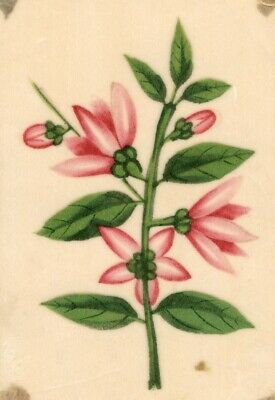 Pink Flowers Pith Painting - Original early 19th-century watercolour painting