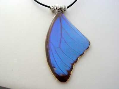 Electric Blue Morpho Hindwing Real Butterfly Wing Necklace (bm10a)