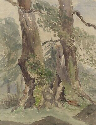 Tree Trunk Study - Original early 20th-century watercolour painting