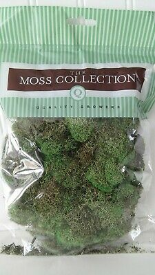 """reindeer moss"" Basil Green, Moss Collection 108.5 cu in, New"