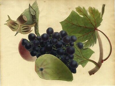 Grapes and Melon Fruit Bunch - Original early 19th-century watercolour painting