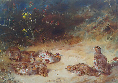Archibald Thorburn. Ltd edition print of a covey of Partridge, unframed.