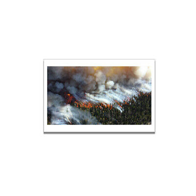 Forest Fire Fog Picture Art Deco Canvas Poster Living Home Room Wall Decor Gifts