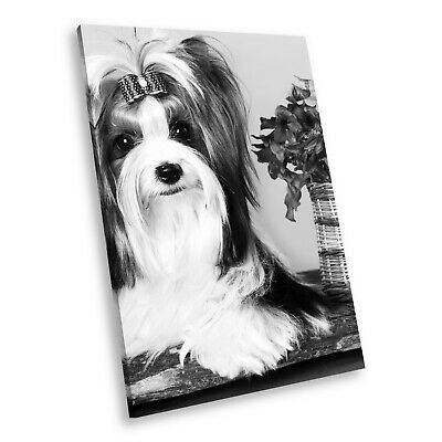 Animal Poster 3329 Picture Poster Print Art A0 A1 A2 A3 A4 MALTESE DOGS