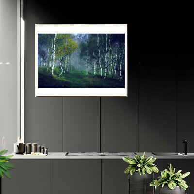 Birch Forest Poster Canvas Art Painting Living Room Picture Home Wall Decor Gift