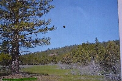 2.2 AC~ Bonanza OREGON LAND~NEAR CALIFORNIA~BEAUTIFUL~TIMBER~VIEWS~