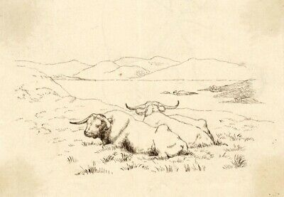 Albert A. Harcourt, Resting Oxen – Original late 19th-century pen & ink drawing