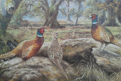 Brian Tovey. Limited edition print of Pheasants in Anstey Wood. Framed.