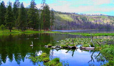 1 acre of    ABUNDANCE & WILDERNESS	 MODOC COUNTY