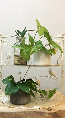 Unique Hand Painted Vintage Hamptons Inspired Metal Plant Stand