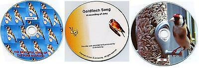 3 x Pure English Goldfinch Song CD'S