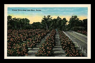 Dr Jim Stamps Us Postcard Orange Tree Grove Lake Shore Florida