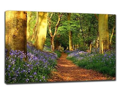 Bluebell Woodland Path Canvas Print Wall Art Picture 18 X 32 Inch