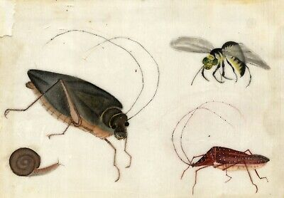 Antique 19th-century Chinese Pith Painting, Shield Bugs, Wasp & Snail Insects