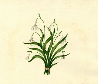 Copperplate Poem Spring with Snowdrop Flowers Watercolour Painting - 1830s