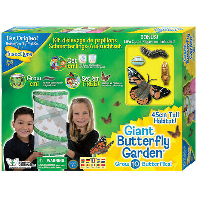 Insect Lore Giant Butterfly Garden Kids Discovery Set