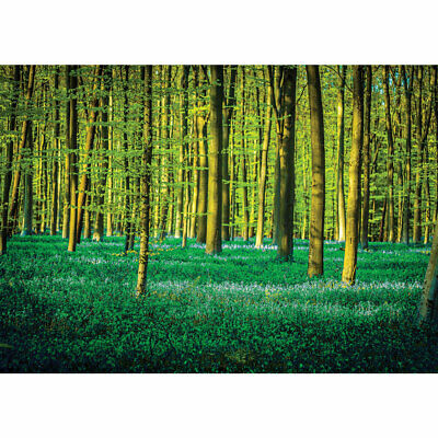 Photo Wall Paper Forest Natural Trees Meadow Liwwing No. 1333