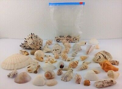 Sea Shells For Aquarium Craft Display Various Sizes and Colours