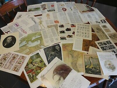 50 Vintage papers,page dictionary music , ephemera collage medical theme no 38