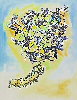 Michaela Krinner 1915-2006 - Insectos
