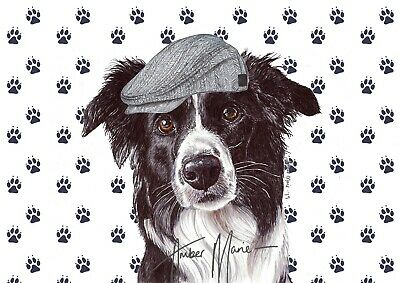 Single Large Luxury Border Collie Dog Greeting Birthday Card Gift/Present