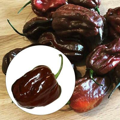 200 Seeds/Pack Chocolate Pepper Seeds Naga Jolokia Chilli Seeds Ghost Peppe L8E3