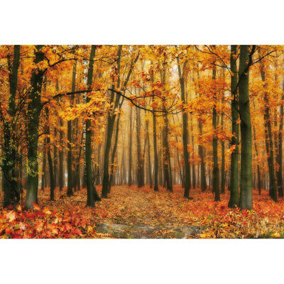 7x5ft Backdrop Autumn Season Maple Leaves Forest Photography Props Backgrounds