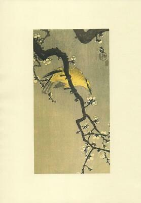 Japanese Reproduction Woodblock Print 20  by Ohara Koson on Parchment Paper.