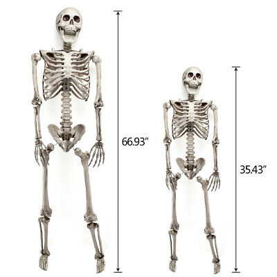 90/170CM Halloween Party Decoration Poseable Prop Human Skull Skeleton Full Size