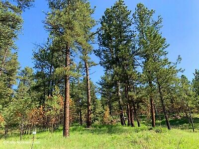 20 Acres  Musselshell County Montana Heavily Treed Views!