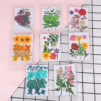 Pressed flower bag mixed organic natural dried flowers diy art floral decor  FE