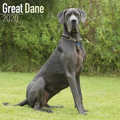 Great Dane Calendar 2020