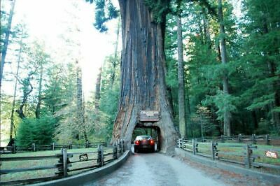 Gateway to Redwood Forest    Willits, Ca.  Mendocino County