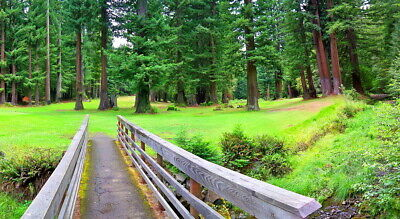 Redwood Forest   Willits, Ca.  Mendocino County