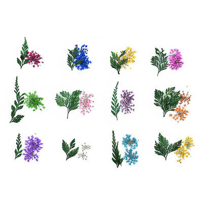 12 Boxes Nail Dried Flower 3D Nail Art Sticker Accessories Supplies for Ladies
