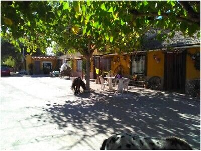 4800m2 Farm in Elche, Stables, horse riding school Alicante, Spain, Costa Blanca