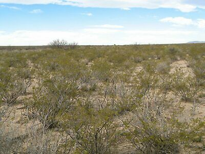 40 Acres in West Texas (Hudspeth County, Texas)