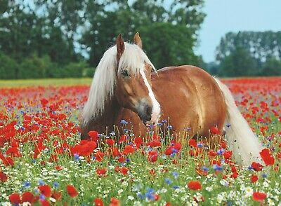 Ravensburger Horse in the Poppy Field 500 piece Jigsaw Puzzle