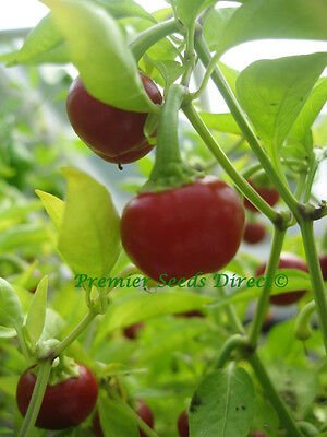 Vegetable  Hot Chilli Pepper Large Red Cherry Hot  150 Seeds