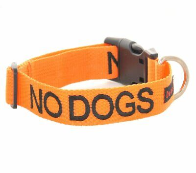 Dexil NO DOGS Lead And Collar Orange Not Good With Other Dogs Alert Warning S-M