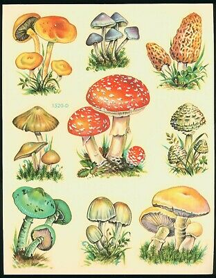 MEYERCORD Decals wild edible MUSHROOMS 1520-D 1950's water slide original old