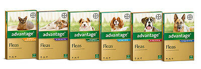 Advantage for Dogs & Cats All Size Flea Treatment for Dogs and Cats Free Ship