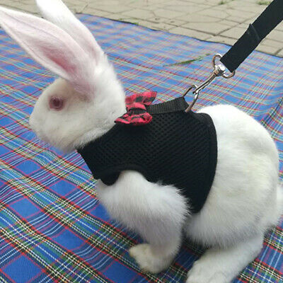 Large Black/Red Adjustable Soft Harness with Elastic Leash for Rabbit Bunny