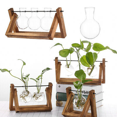 Hydroponic Plant Vases Glass Vase Vintage Bonsai Flower Pot Terrarium Tabletops