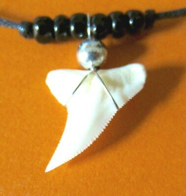 REAL TIGER SHARK TOOTH PENDANT CORD NECKLACE SURFER BEACH boy mens womens new