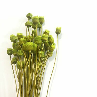 Natural Dry Mini Happy Flower Stems - Green