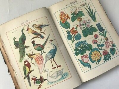 1940s Japanese Science Textbook Bird Insect Plant Human Body Picture Vtg c131