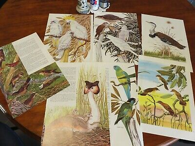 bird prints from old books great for decoupage altered art journals craft